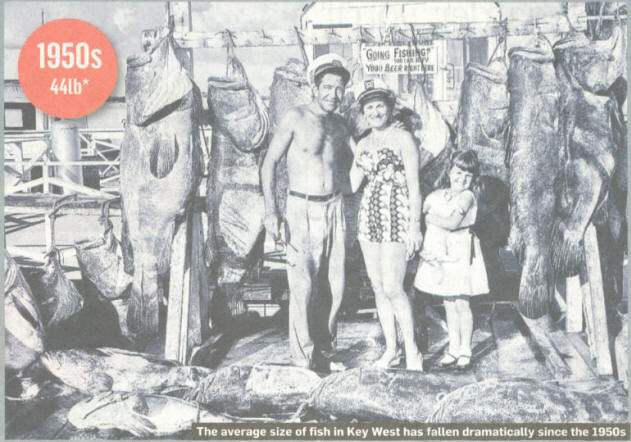 fish_size_1950s